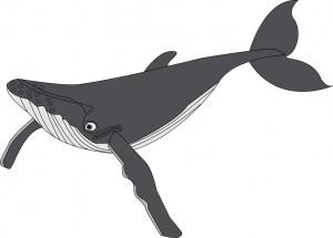 クジライラスト1