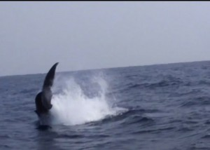 クジラペダンクル2