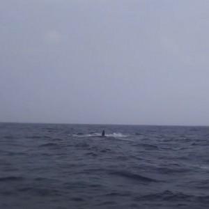 クジラペック